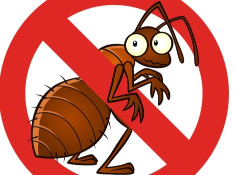 Have You Heard of Bed Bugs?