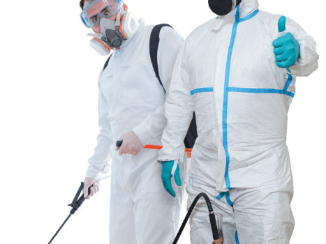 Hiring the Right Pest Control Company